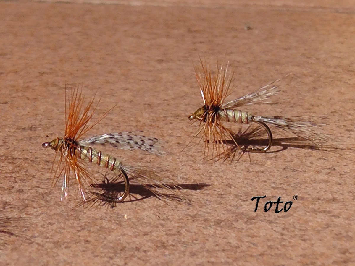 La mosca Lajita