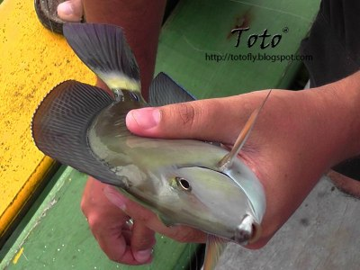 Pesca en San Andrés 16