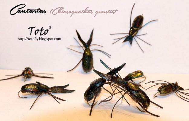 Cantarias (Chiasognathus grantii) – Una creación de Ricardo Child