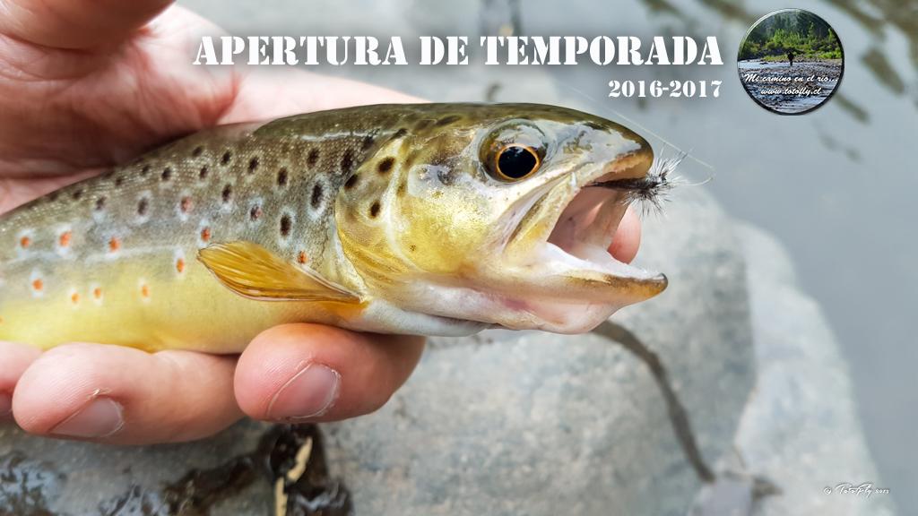 portada-inicio-temporada-2016-2017