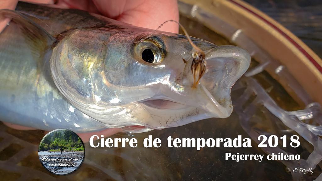 Cierre de temporada 2018 del pejerrey chileno