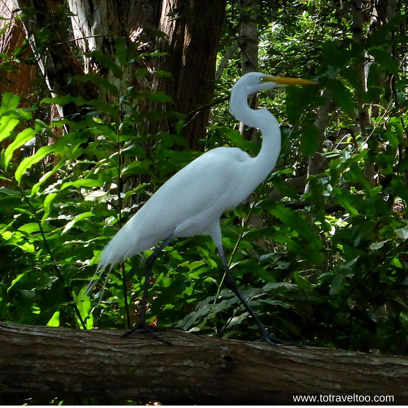 Birds of the Celestun Biosphere Reserve