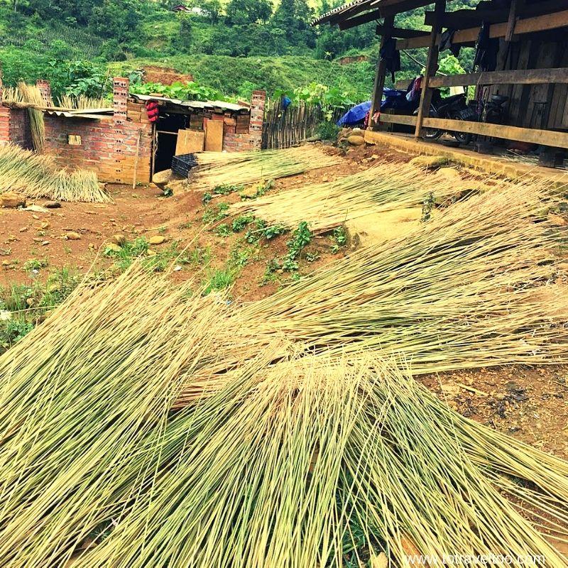 Drying hemp - things to do in Sapa