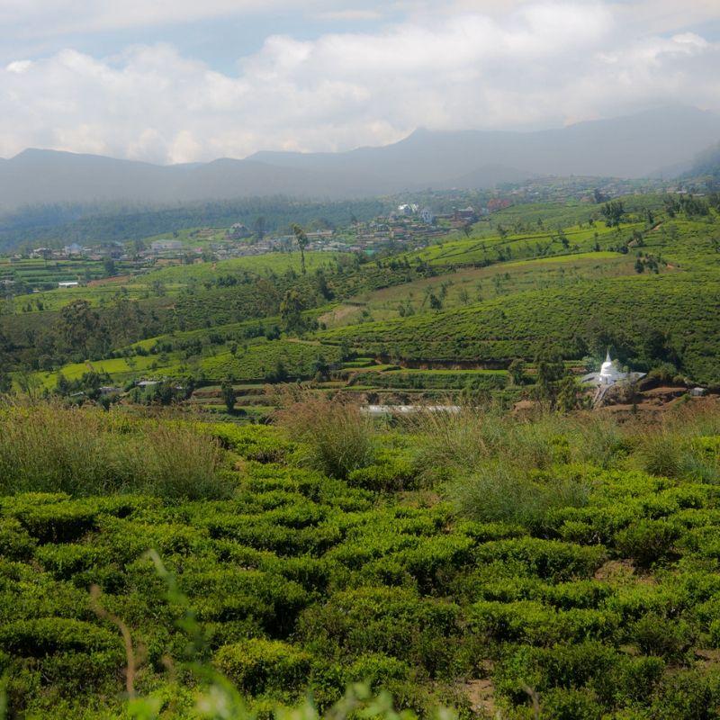 Eliya in Sri Lanka