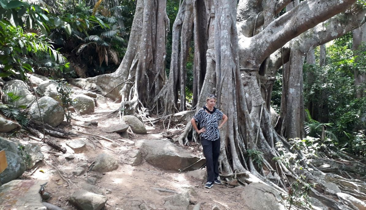 The 800 year old Banyan Tree