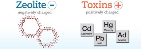 Zeolite is Negatively-Charged