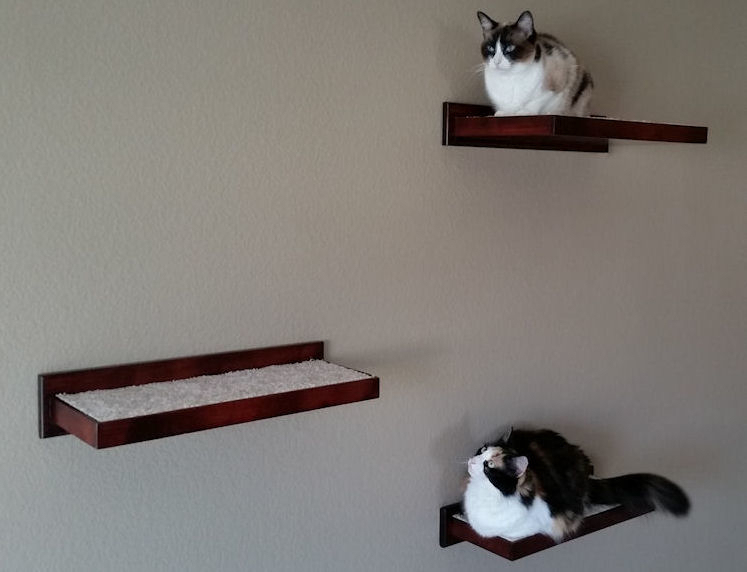 Cat Climbing Shelves and Perches for Walls