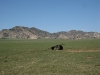 mongolie-01