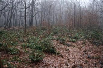 Чайна гора