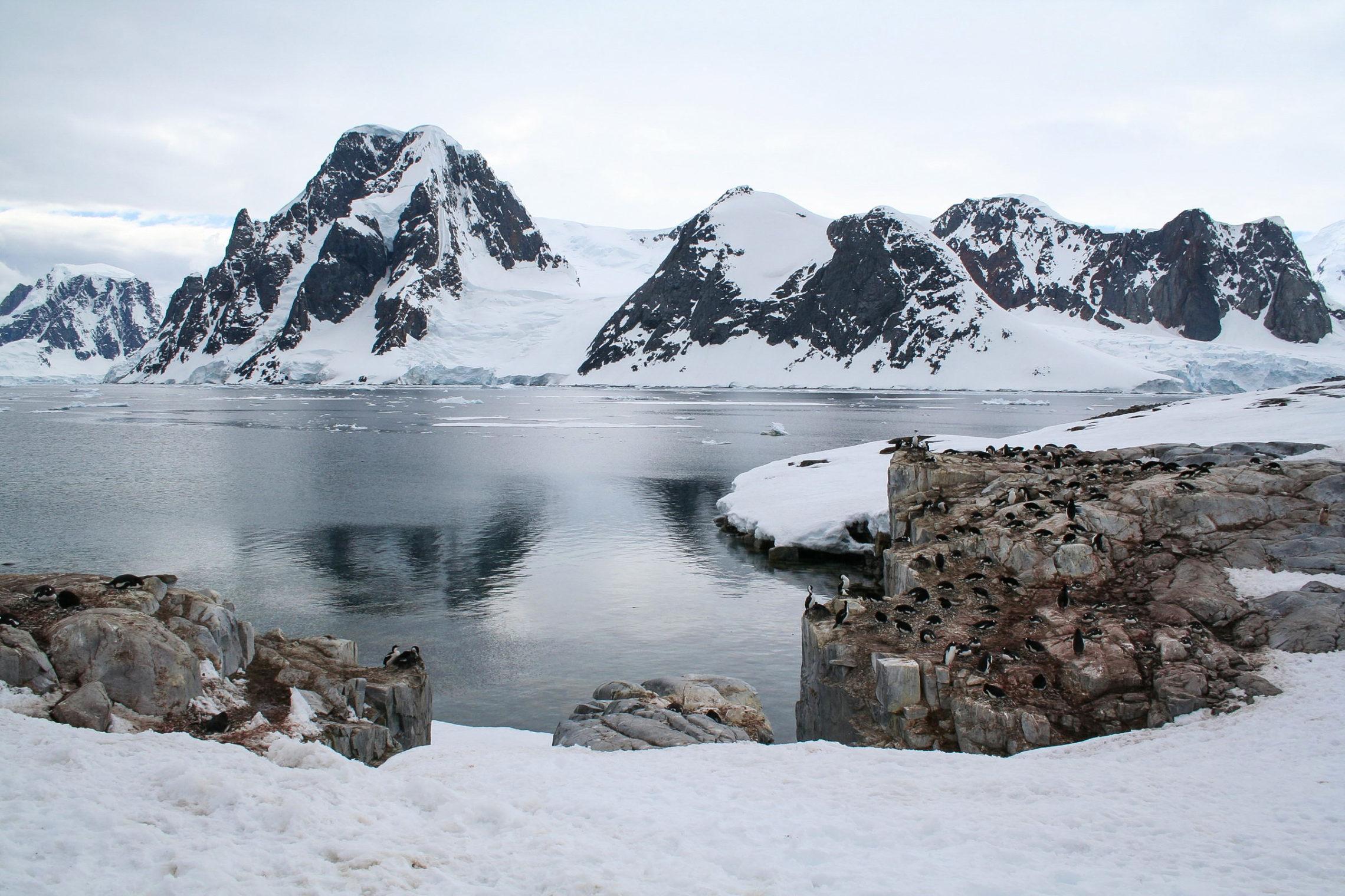 Isole Falkland Georgia del Sud e Penisola Antartica  Tour 2000 America Latina