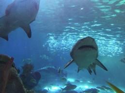 2018-08-22 - Aquarium Toronto-2