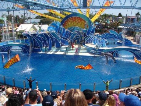 SeaWorld San Diego Show mit akrobatischen Kunststücken von Delfinen & Killerwalen