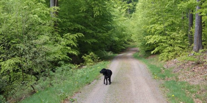 Wandern mit Benny