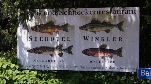 Salzburger Seenland 022
