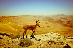 Touring Israel - ramon crater by amira_a on flickr creative commons