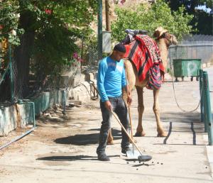 Touring Israel - May 2 2015 Jericho 154