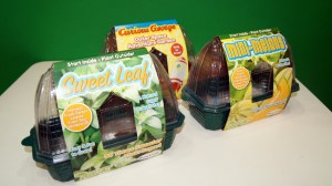 Start small and green! Let kids enjoy plant miniatures right in your own home.