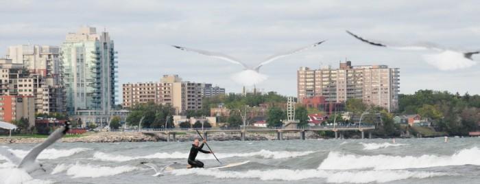 Seagulls - Eric Marshall