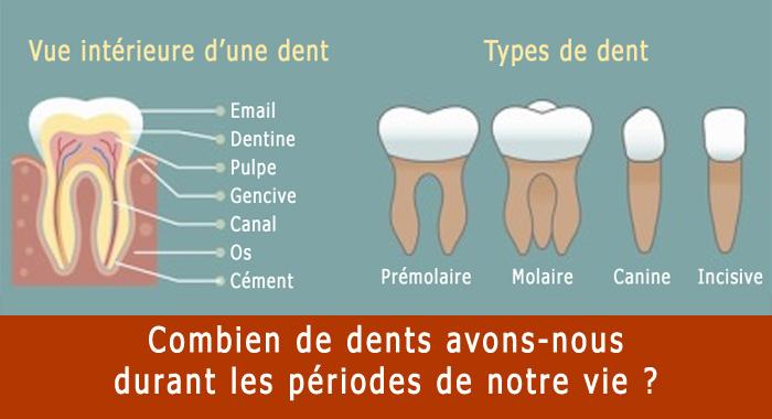 combien-dents