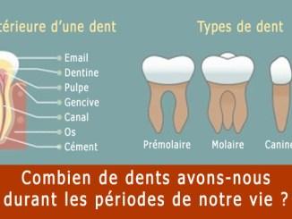 Combien de dents avons-nous ?