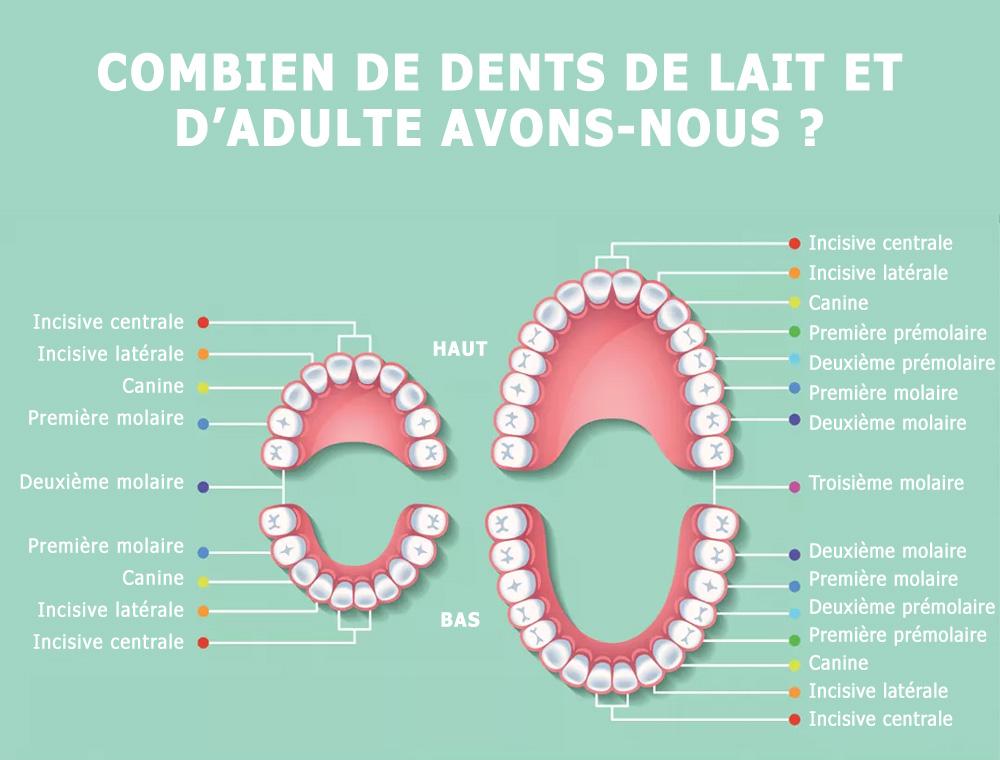 Combien on a de dents