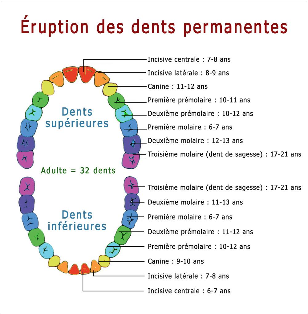 eruption-dents-permanentes