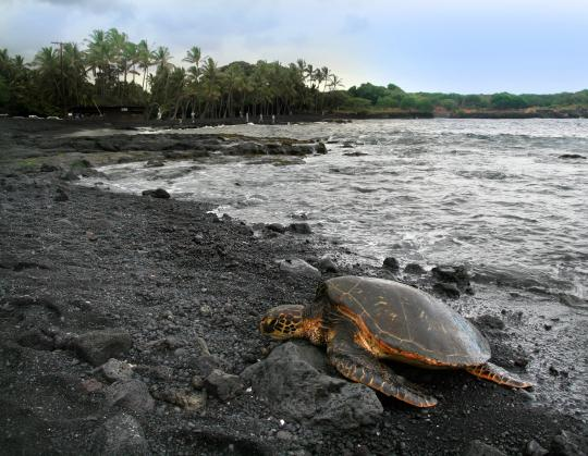 punalu beach hawaii