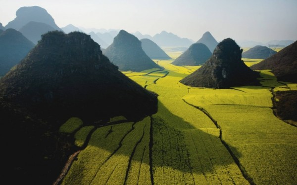 Canola Flowers Luoping