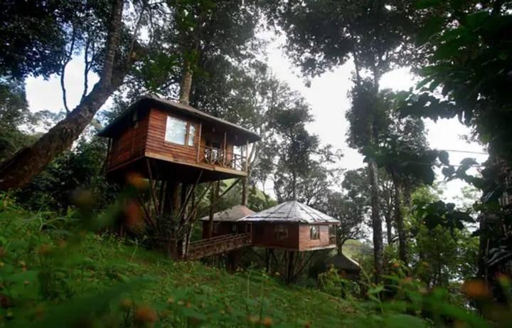 nature-zone-treehouse-munnar-kerala