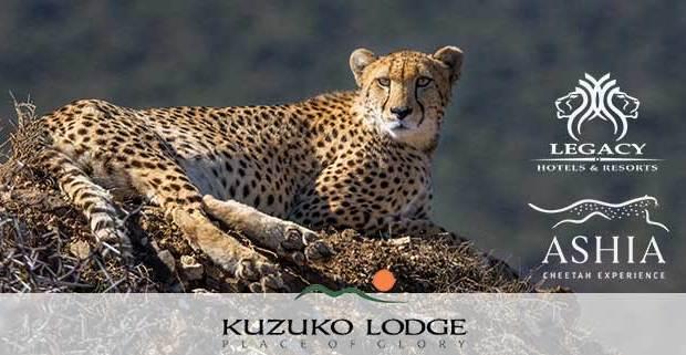 Cheetah at Kuzuko Game Reserve