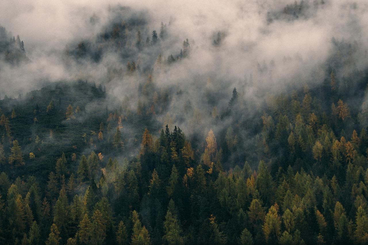 How reforestation can produce rain
