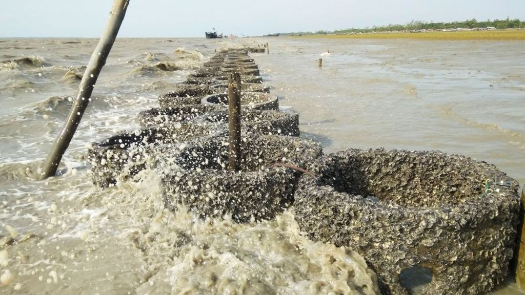 Oysters as protection agains rising sea levels