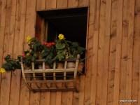 Cisnadioara, Romania - Flowers decorate house windows.