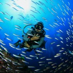 Diving Activities In Eilat
