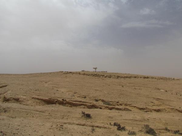 The seemingly inhospitable landscape of the Negev Desert