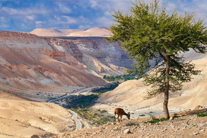 Negev Desert Day Tour From Eilat6