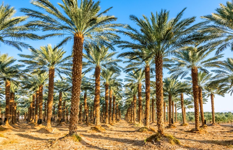 Red Canyon, Desert Agriculture, And Kibbutz Life Tour - 1 Day From Eilat5