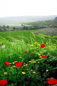 The view from Tel Gezer. Image credit Laura Arenson