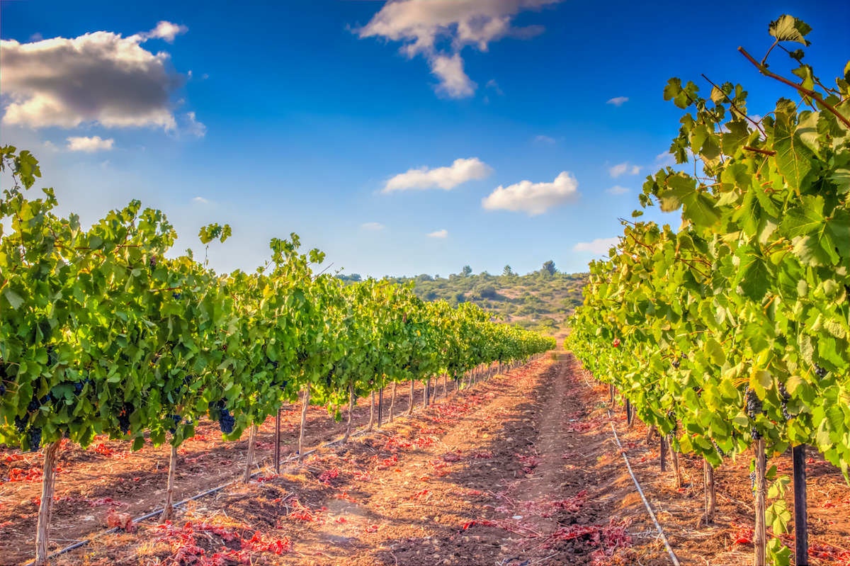 Flavors Of The Galilee- 1 Day Food Tour