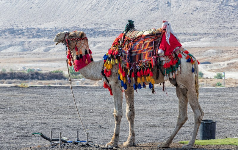 Negev Desert And Bedouin Experience Day Tour 8