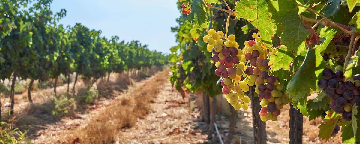 Food & Wine Private Tour In The Jerusalem Hills 5