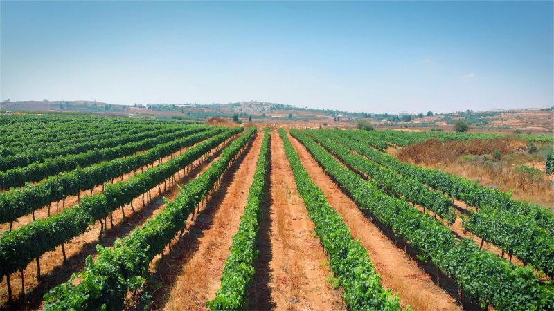 Southern Israel & Negev Food And Wine Private Tour 2