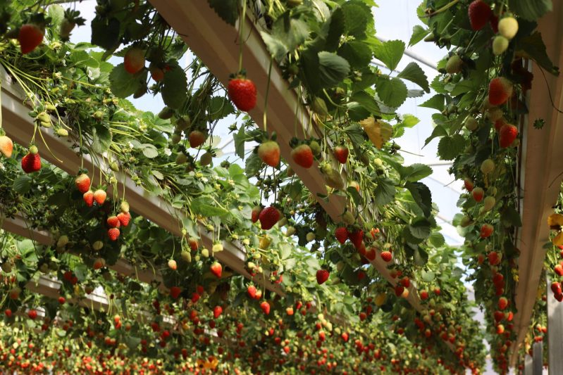 Southern Israel & Negev Food And Wine Private Tour 3