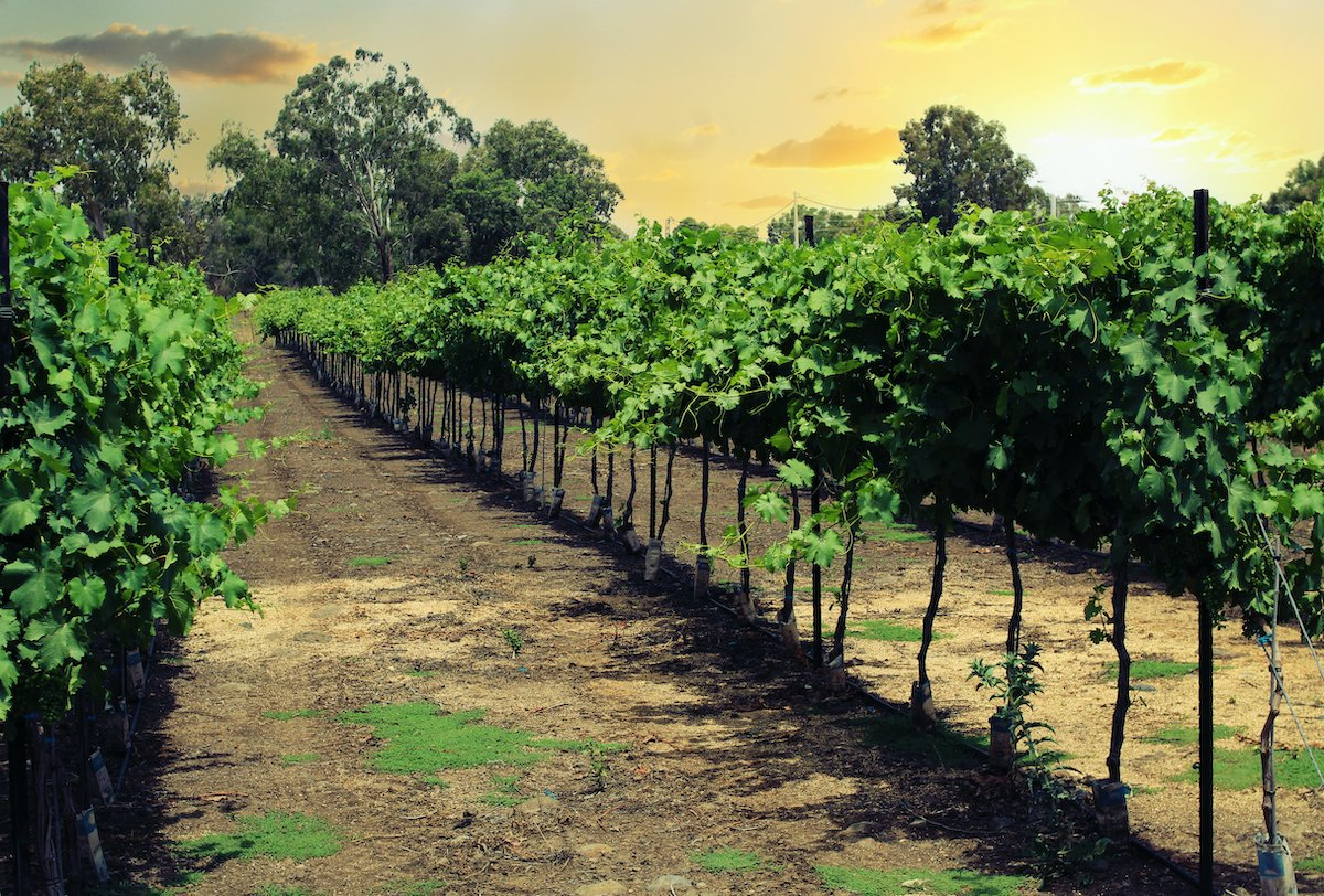 Northern Israel Food And Wine Private Tour