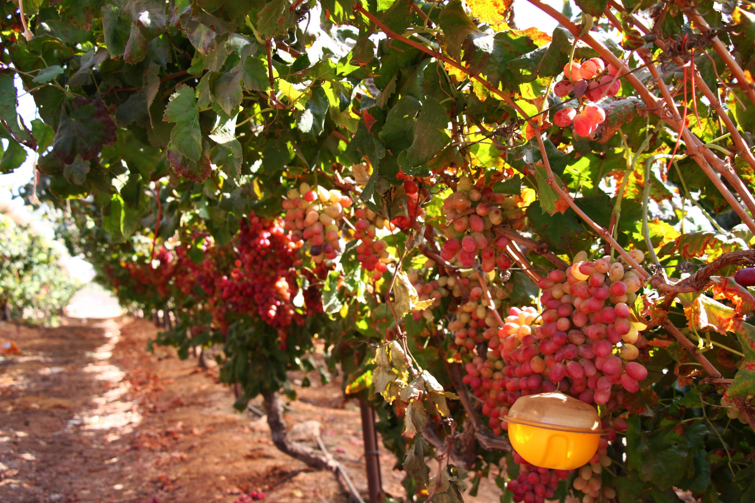 Food & Wine Private Tour In The Jerusalem Hills