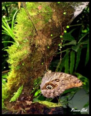faune, flore, visite sans trace, environnement