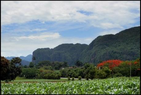 Cuba, Vivales, campagne, nature