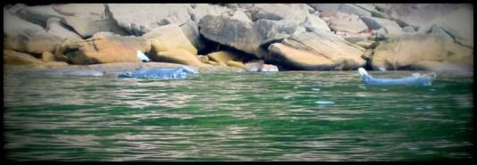 Kayak de mer en Gaspésie, phoques, loups marin, Gaspésie