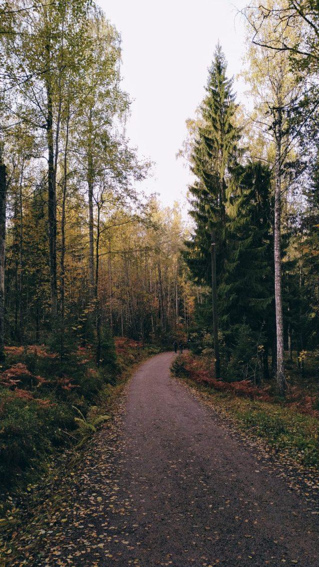 Autumn golden leaf hiking trail at Nuuksio Park