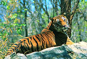 Periyar Wildlife Sanctuary Periyar National Park in
